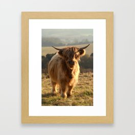 Young Highland Cow Framed Art Print