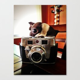 Terrier has an eye for photography Canvas Print