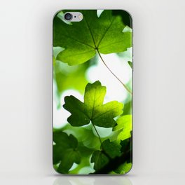 Green Maple Leaves iPhone Skin