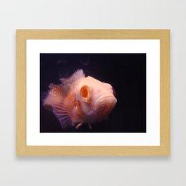Kiss a Fish Framed Art Print