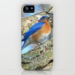 Bluebird in Tree iPhone Case