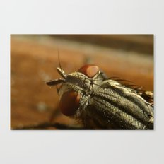 Fly Zone Canvas Print