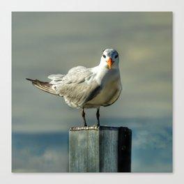 Birdie Stare Down Canvas Print