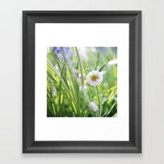 sunny summer meadow Framed Art Print