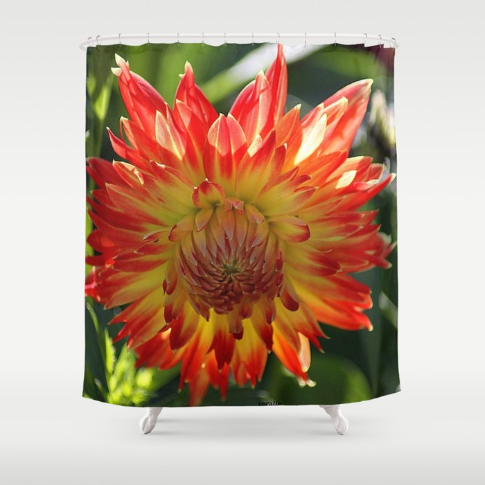 Fire In The Sky dahlia flower 096 Shower Curtain