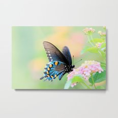 Spicebush Swallowtail Butterfly on Lantana Metal Print