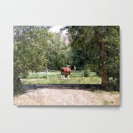 Marty the Clydesdale Metal Print