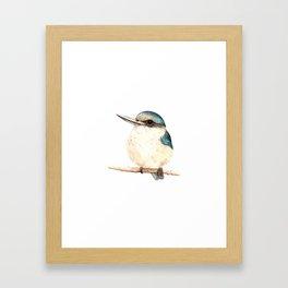 Kotare / Kingfisher - a sacred New Zealand native bird 2013 Framed Art Print