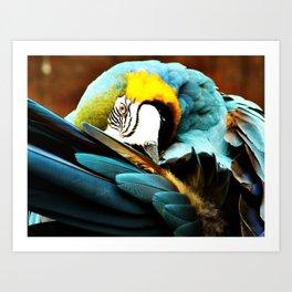 Parrot I Art Print