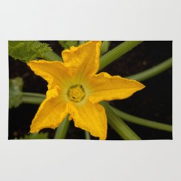 Courgette / zucchini flower Rug