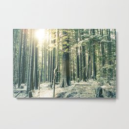 Sun in snowy Forest  Metal Print
