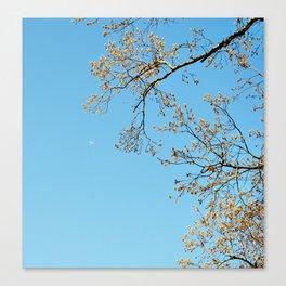 Serene Lonliness  Canvas Print