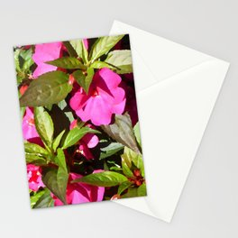 New Guinea Busy Lizzie Stationery Cards