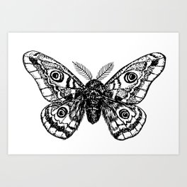 Emperor moth drawing Art Print