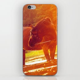 horse around sunset iPhone Skin