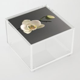White Orchid by Teresa Thompson Acrylic Box