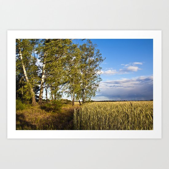Corn Field with Birch Trees Art Print
