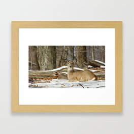 Alert Deer Framed Art Print