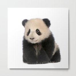 Young Giant Panda Metal Print