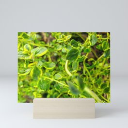 Lemon Thyme Mini Art Print