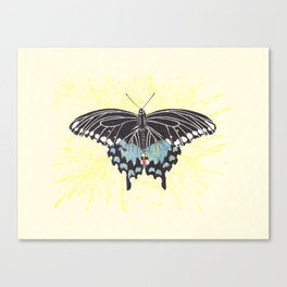 Small Spicebush Swallowtail Canvas Print