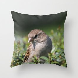 Lovely Sparrow Throw Pillow