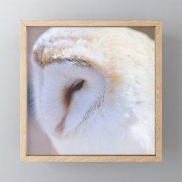 Sleepy Owl Framed Mini Art Print