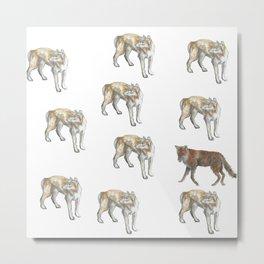 Dingo and Fox Metal Print