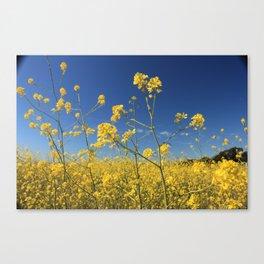 mustard flowers Canvas Print