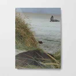 Two Fur Seals, One beach Metal Print