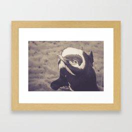 Adorable African Penguin Series 4 of 4 Framed Art Print