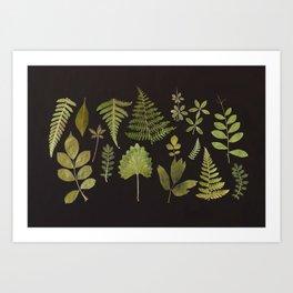Plants + Leaves 5 Art Print