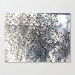 Dead Ivy Canvas Print