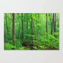 Forest 7 Canvas Print