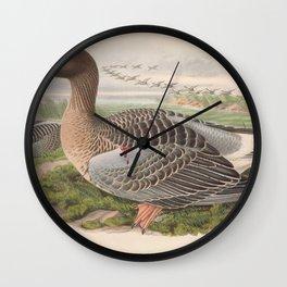 001 Grey Lag Goose anser ferus4 Wall Clock