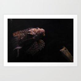 Barcelona Aquarium IX Art Print