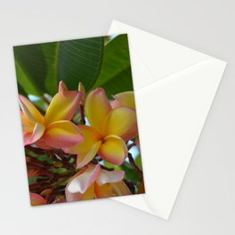 Frangipani Stationery Cards