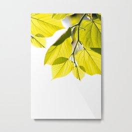 Twig with young green leaves on white Metal Print