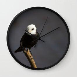 Birds from Pantanal Freirinha Wall Clock