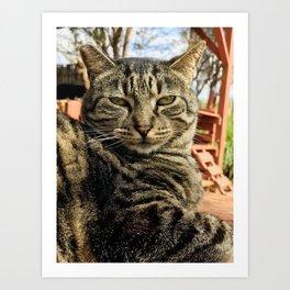Big Boi (Lanai Cat Sanctuary) Art Print