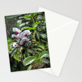 Tropical Orchids Stationery Cards
