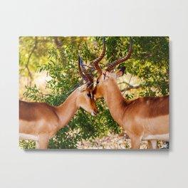 Gazelle (Color) Metal Print