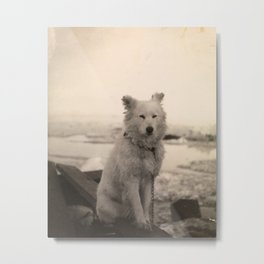 Dog on Nansen's Fram Expedition to the Arctic Metal Print