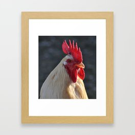 Rooster Painting Framed Art Print