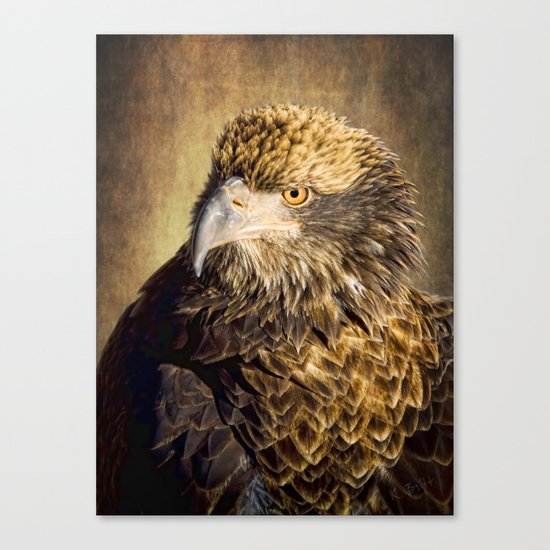 Fine Feathered Friend Canvas Print