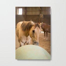 horse by Christin Noelle Metal Print