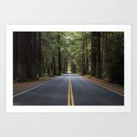 Redwood Road Art Print