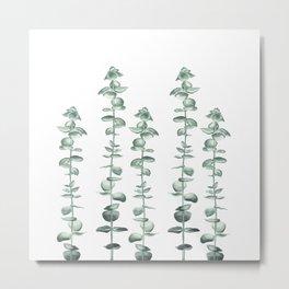 Elegant Eucalyptus  Metal Print