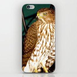 Red Tail Hawk iPhone Skin