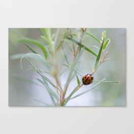 Ladybug and the Tea Tree Canvas Print